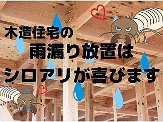 木造住宅の雨漏り放置は危険!シロアリ被害に注意!のイメージ